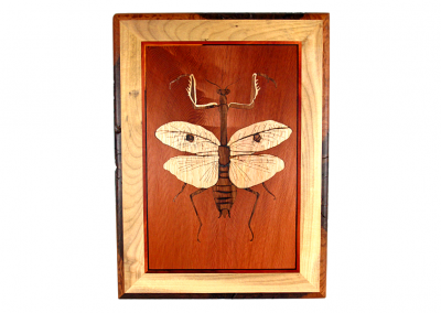 Mantodea wall art