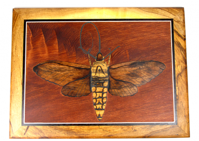 Sphingidae wall art