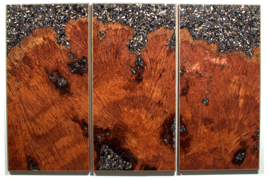 Redwood Tryptic with mussle shell Wall Art